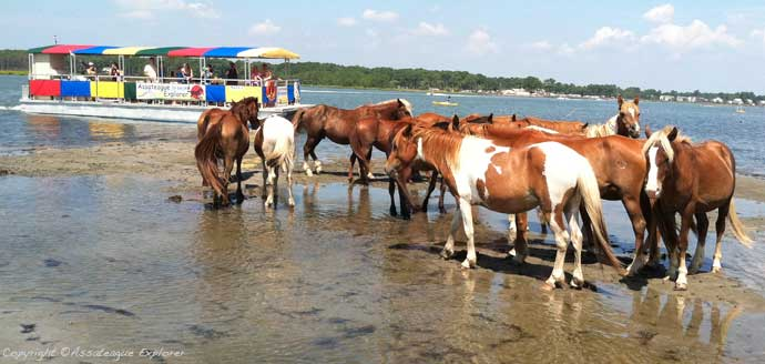 Assateague Explorer